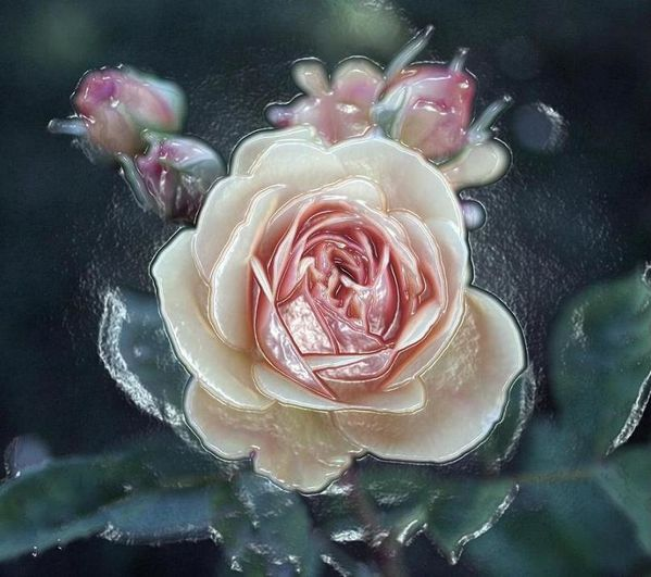 Rose Porcelaine...