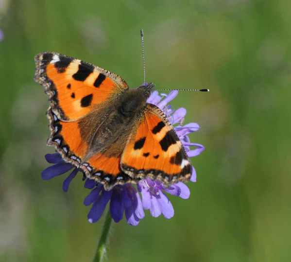 Papillons-insectes-2 4352