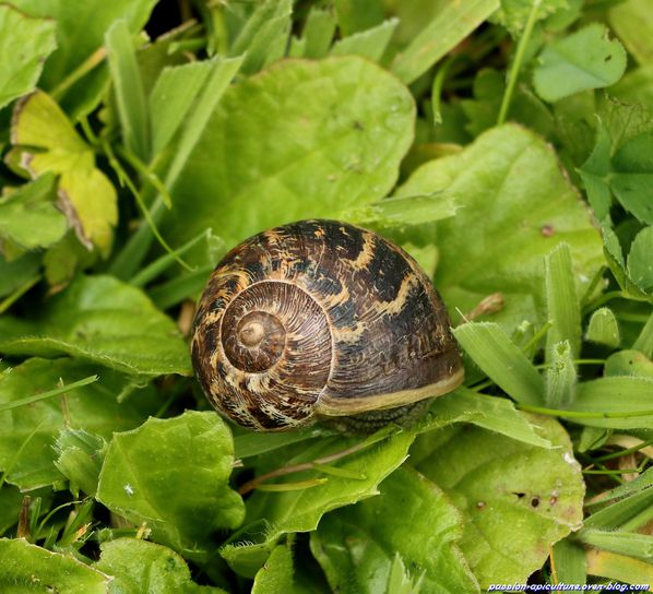 Escargots (3)