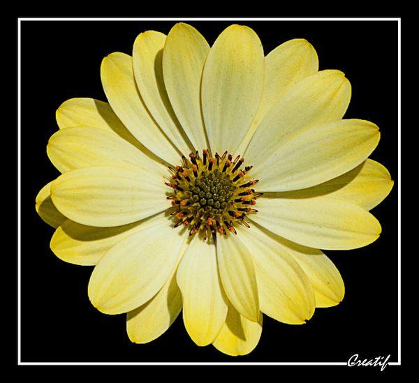 Fleurs--sur-fond-noir---13-.jpg