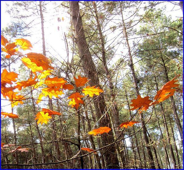 feuilles-chambiers-s.jpg