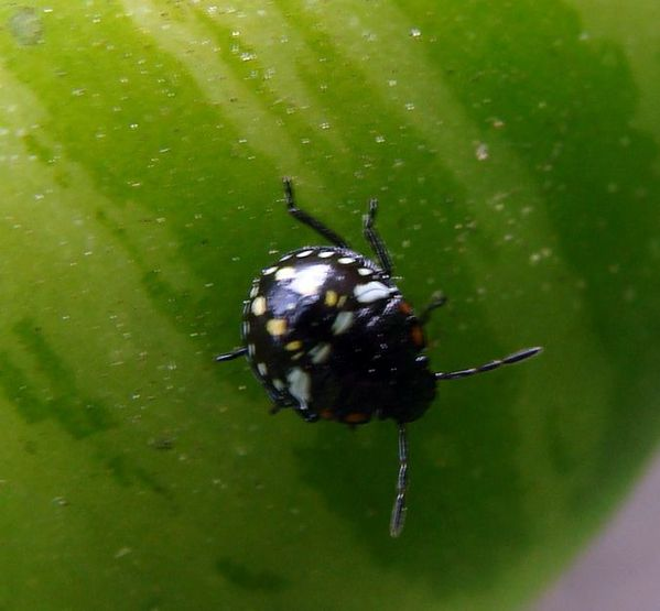 2010-07-29 oise - insectes - travaux 054