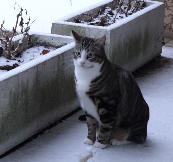 chats neige4