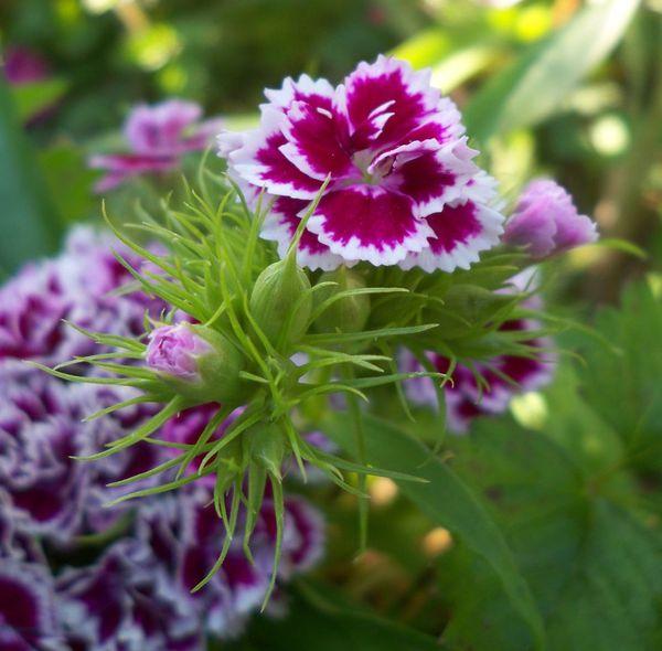 jardin - butte-bergeyre - 75019 - 5