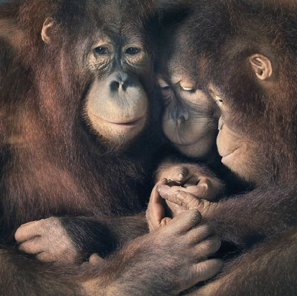 Tim-Flach-16.jpg