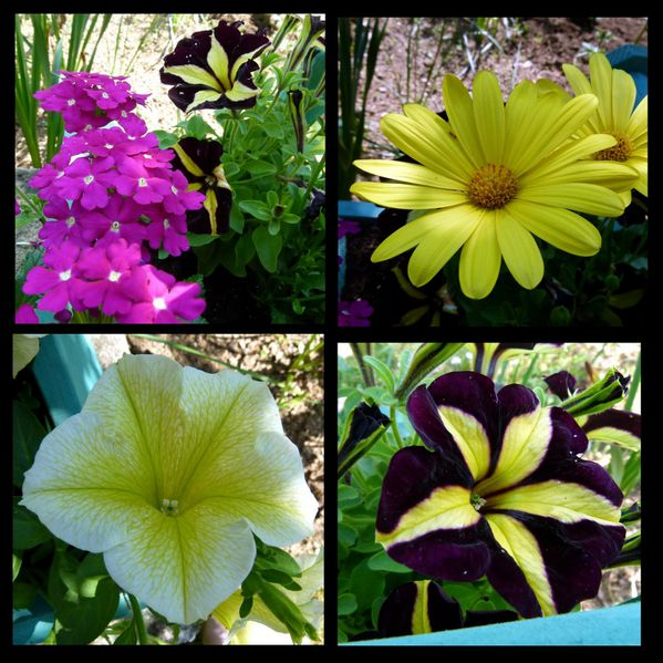 Fleurs---jardin1.jpg