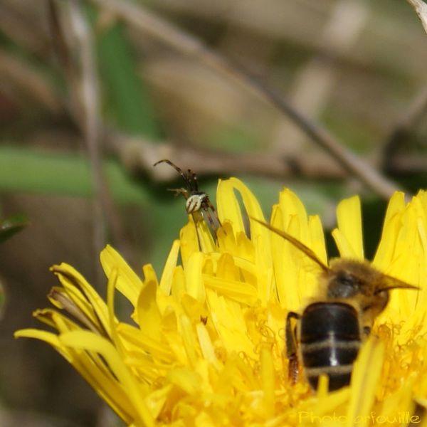 mon-jardin-en-avril-photofarfouille-nature-14