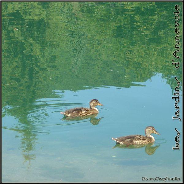 jardins-annevoie-juillet-photofarfouille-077