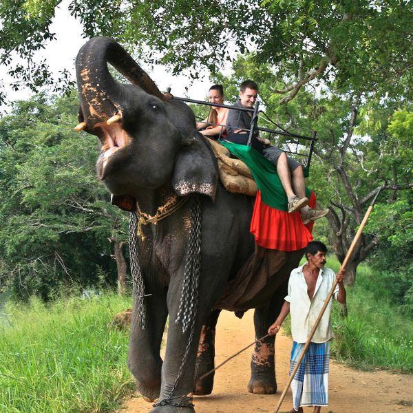 Sri Lanka J03 1 Elephant01
