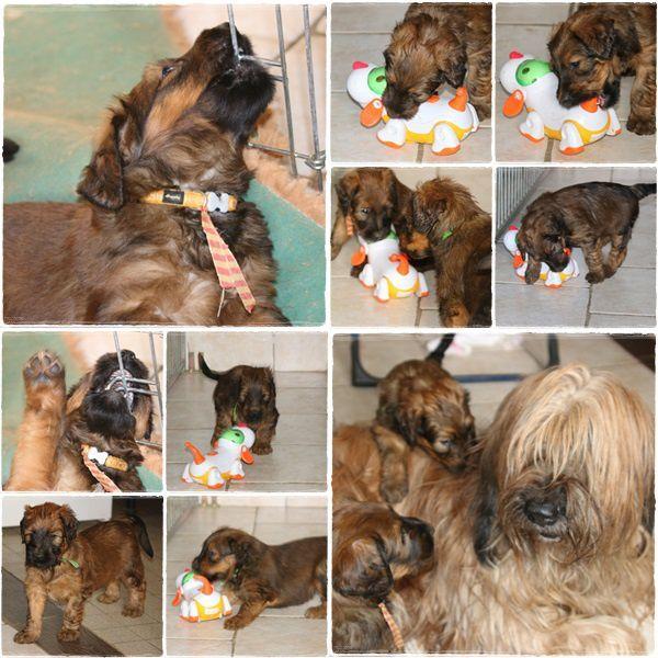 22 janvier avec Ashka et le jouet chien