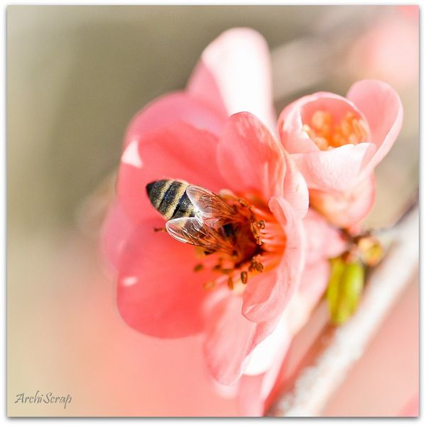 Fleurs mars 2014 RED-23