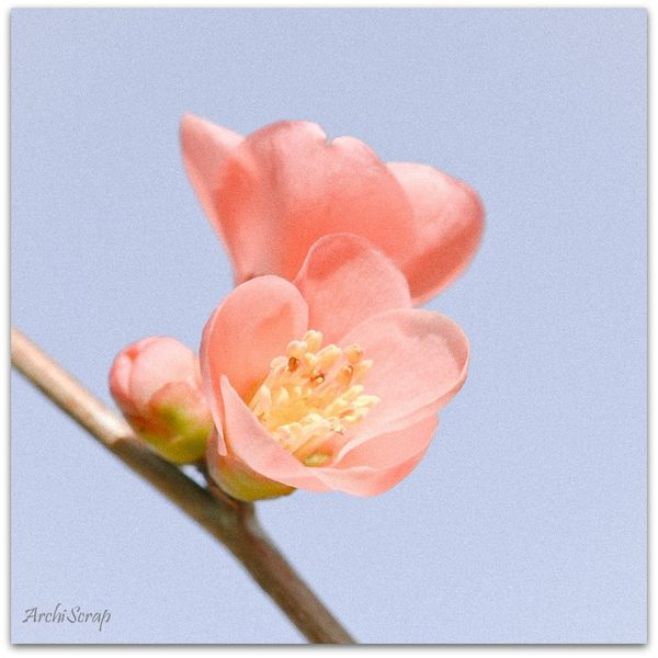 Fleurs mars 2014 RED-6