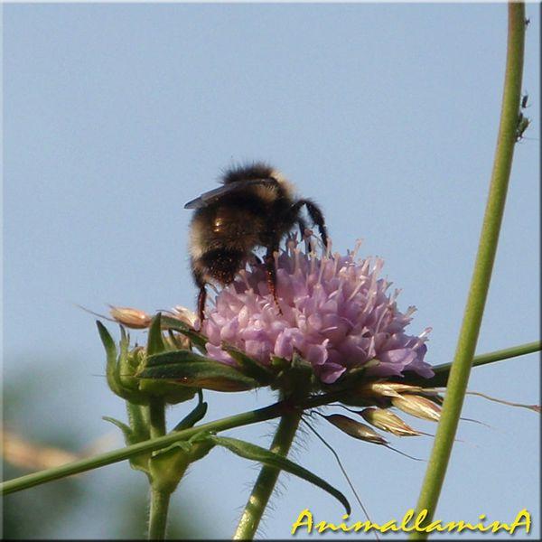 mon-jardin-en-juin-animallamina-05
