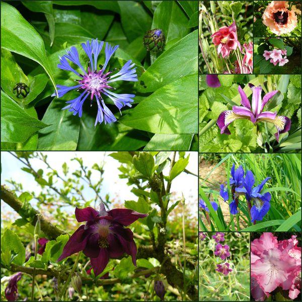 Les fleurs du moment for Place du jardin aux fleurs