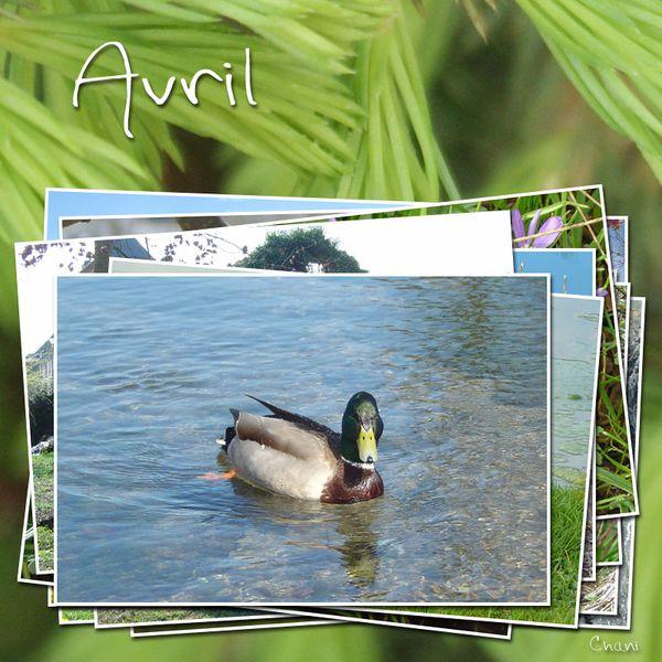photo-image-avril-photofarfouille-nature-31