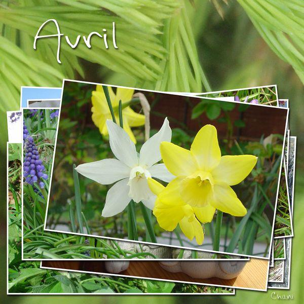 photo-image-avril-photofarfouille-nature-36