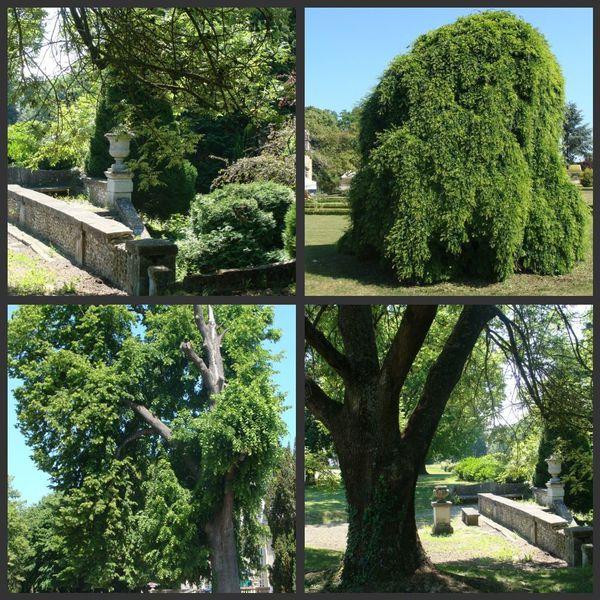 arbres arnouville