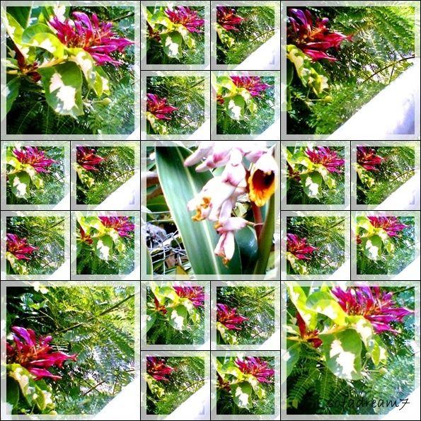fleurs--