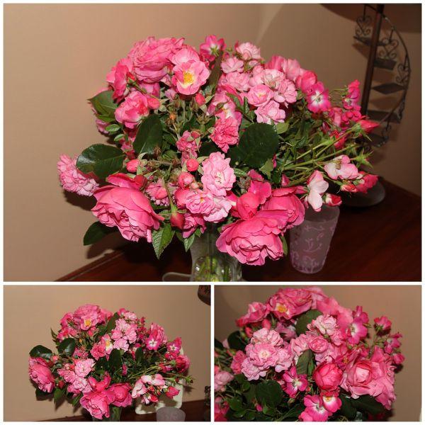 all-pink-roses-b.jpg