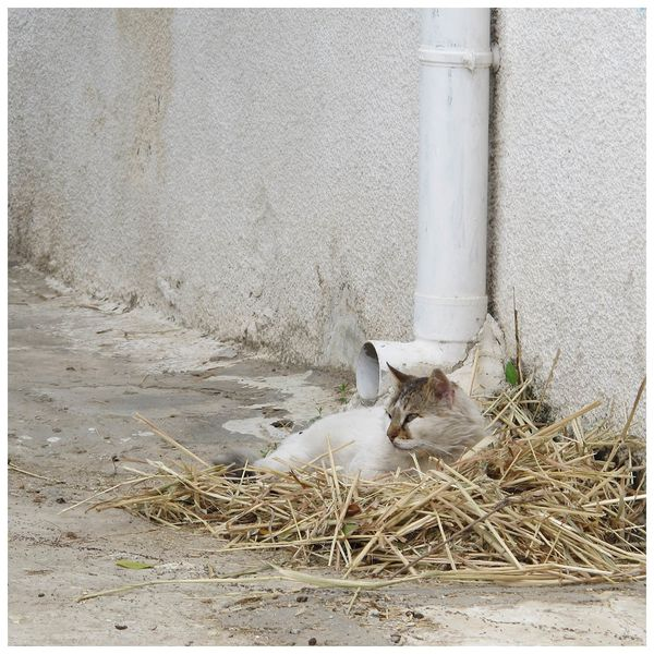 chat-des-rues_01.jpg