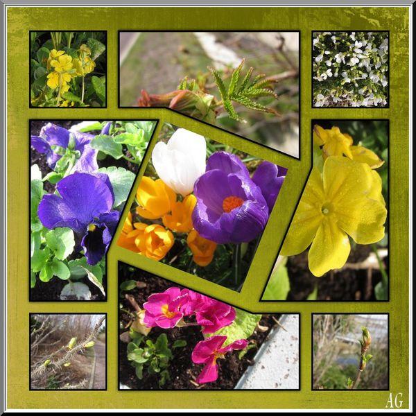 Fleurs_du_27-04-12.jpg