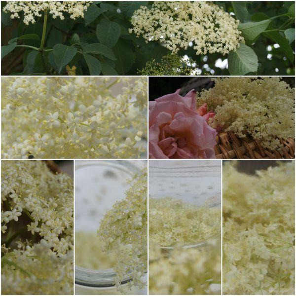 PicMonkey-Collage1.jpg