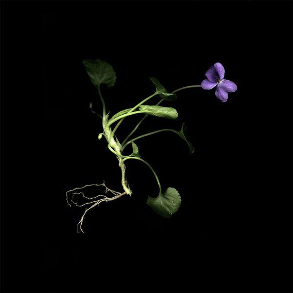 violette-02-copie---copie.jpg