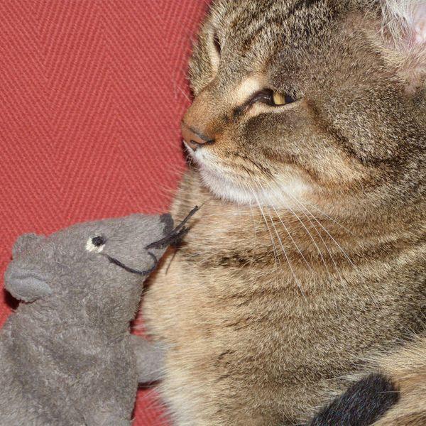 mimosa-et-le-rat---gros-plan---janvier-2013.jpg
