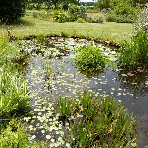 santonine---juillet-2014---bassin-au-shishi-odoshi--800x800.jpg