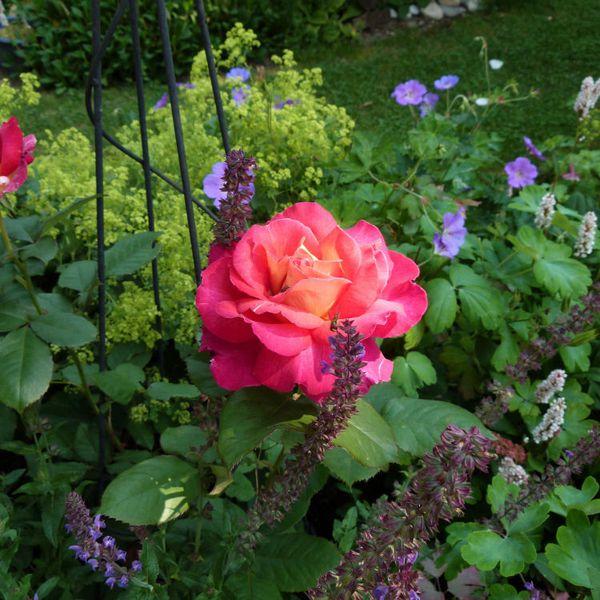 rosier bolchoi - juillet 2013