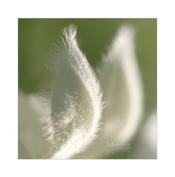 lamier-blanc.jpg