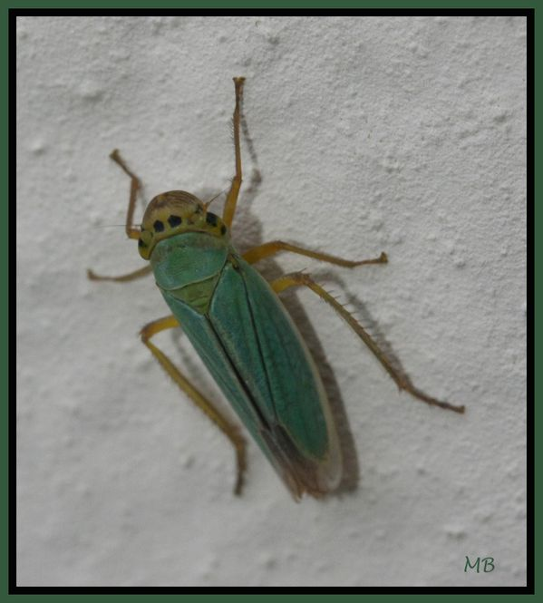Insectes 01 4292