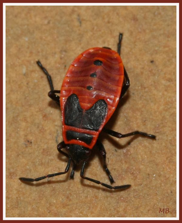 Insectes 01 4295