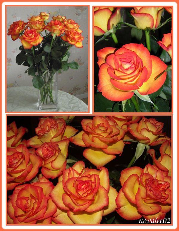roses12 2010 1