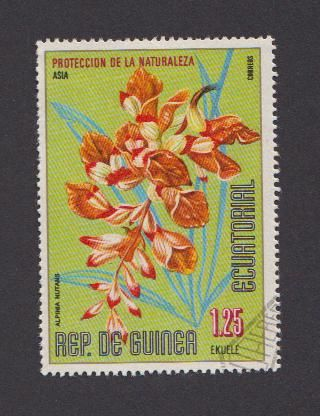 fleurs-guinee-equatoriale.jpg