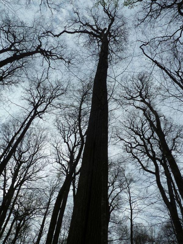 rencontre discret gratuit forest