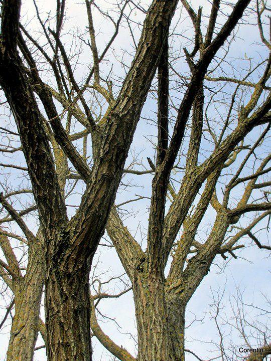 k03---Branches.JPG