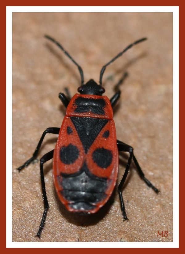 Insectes 01 4296