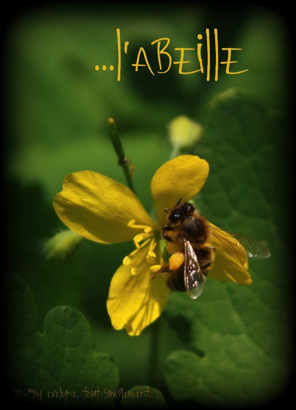Macro---Fleurs--Plantes--Vegetaux-.-6538.JPG