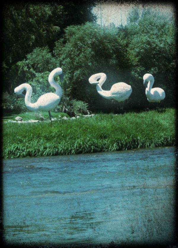 Statues-cygnes-sur-les-bords-de-l-Ebre---Saragosse.jpg
