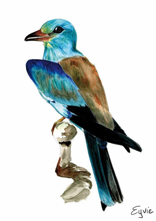oiseau2.jpg