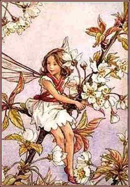 zzz-5-Barker-La-fee-fleur-de-cerisier.jpg
