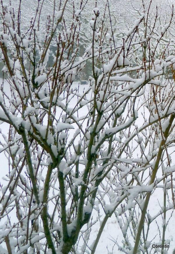 u03 - neige et branches