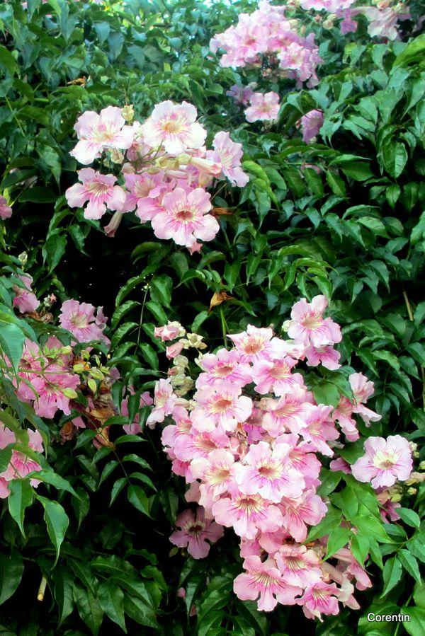 dk28---fleurs-4.JPG