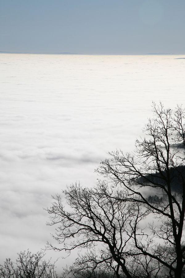 La forêt dans les nuages 2