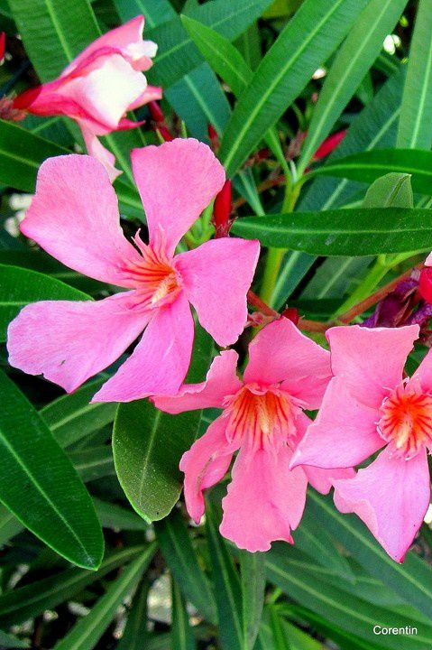 o04 - Jolies fleurs