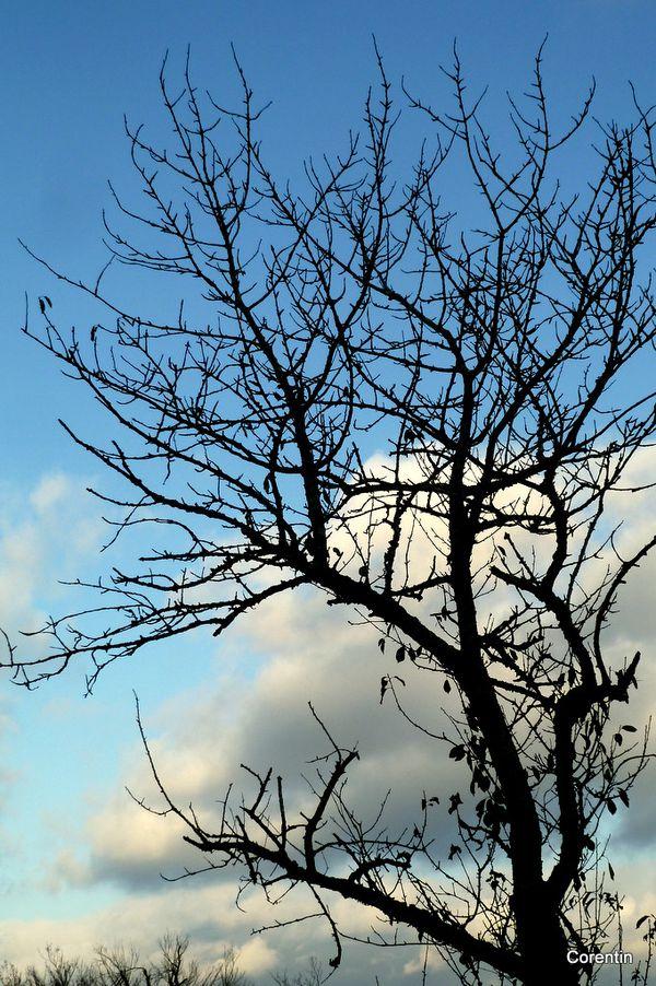 g04---Branches-et-ciel.JPG