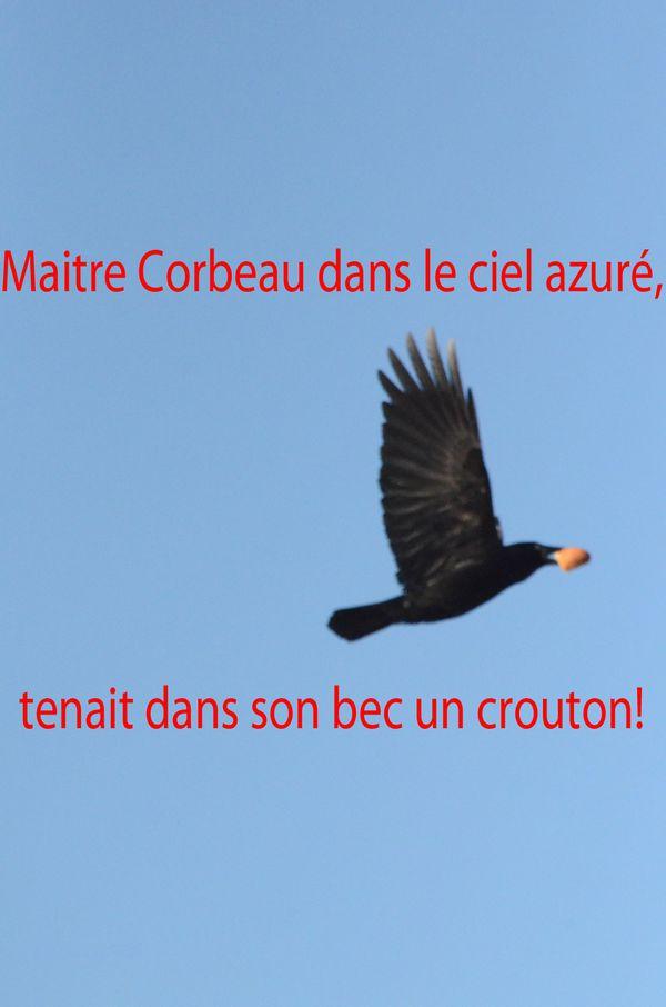 Corbeaux à Gérardmer 120