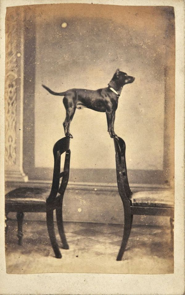 1860. Portrait of Clyde the dog