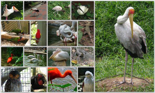 08-2013-Malaisie-KL-Birdpark birds